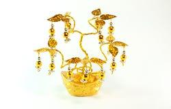 kinesisk guld- tree Arkivbilder