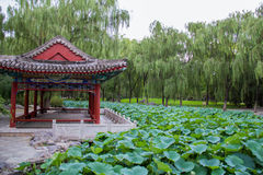 Kinesisk klassisk trädgård Royaltyfri Fotografi
