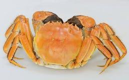 kinesisk krabbamitten Arkivbild