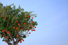 Kinesisk lykta på ett träd royaltyfri bild