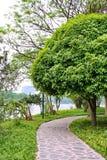Kinesisk Park. Arkivbilder