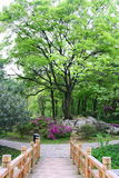 Kinesisk Park. Arkivbild