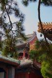 Kinesisk tempel/slott Forbidden City, Peking Sörja träd i förgrund arkivbilder