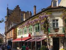 Kinesisk wisteria i blom på ett hus i Baden-Baden Arkivbilder
