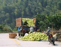 Kinesiska bönder som laddar skörden av den mogna pomeloen in i bilen Royaltyfria Bilder