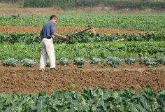 Kinesiska bönder plöjer fältet Arkivbilder