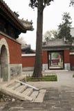 Kinesiska forntida byggnader och cypress Royaltyfri Bild
