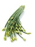 kinesiska gräslökar Royaltyfria Bilder