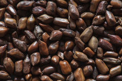 Kinesiska kaffebönor Arkivbilder