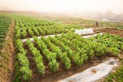 Kinesiska kvinnor som skördar potatisar i fält, gammal by och dimma royaltyfri bild