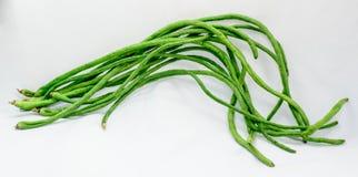 Kinesiska långa bönor på vit bakgrund Fotografering för Bildbyråer