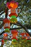 Kinesiska lyktor som hänger i träd Arkivbild