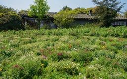 Kinesiska traditionella hus i blommor på den soliga vårmiddagen Royaltyfri Bild