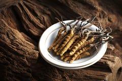 kinesiskt använt traditionellt för ingrediensmedicin Royaltyfri Fotografi