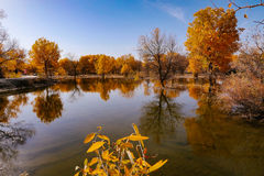 kinesiskt landskap Royaltyfria Foton
