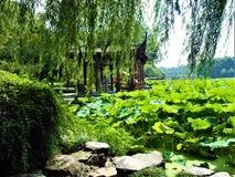 Kinesiskt landskap, sjö, lotusblommablommor och pil arkivbilder