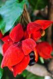 Kinesiskt växt- frö Royaltyfria Bilder