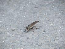 Kinesiskt vila för mygga royaltyfri foto