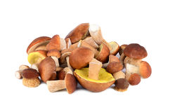 King boletus mushrooms Stock Photo