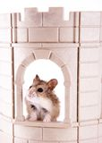 King of the Castle Royalty Free Stock Image