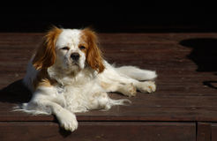 King Charles Portrait Royalty Free Stock Images