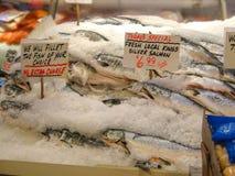 King chinook salmon Royalty Free Stock Photography