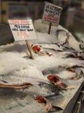 King chinook salmon Stock Image