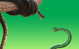 King cobra and green snake fighting and attacking 3D rendered model. King cobra and green snake fighting and attacking each other  on green background. 3D Stock Photo