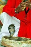 King cobra snake. In his basket royalty free stock photos
