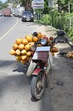 King coconut transport Stock Images