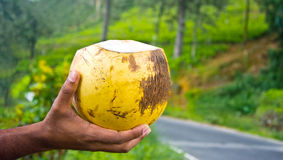 King Coconut Stock Photography