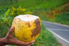 King Coconut Royalty Free Stock Photography