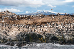 King Cormorant colony, Beagle Channel, Argentina - Chile. King Cormorant colony sits on an Island in the Beagle Channel. Sea lions are visible laying on the Stock Photo