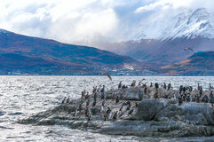 King Cormorant colony, Beagle Channel, Argentina - Chile. King Cormorant colony sits on an Island in the Beagle Channel. Sea lions are visible laying on the Stock Photos