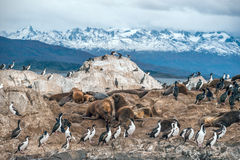 King Cormorant colony, Beagle Channel, Argentina - Chile. King Cormorant colony sits on an Island in the Beagle Channel. Sea lions are visible laying on the Stock Images