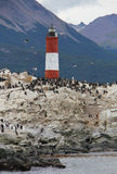 King Cormorants nesting on Bird Island - Argentina. A colony of King Cormorants Phalacrocorax atriceps nests on Bird Island next to the lighthouse near the Port Royalty Free Stock Photography