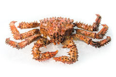 King crab Stock Photos