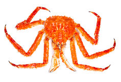 King Crab Royalty Free Stock Images