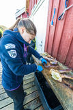 King crab caught in Norwegian waters. HONNINGSVAG, NORWAY - JUNE 30, 2014: King crab, also called stone crab, part of the superfamily of crab-like decapod Stock Photo