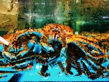 King crab. Few alaskan king crab in a tank in a seafood market Hongkong China Stock Image