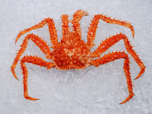 King Crab. On ice background Royalty Free Stock Photo