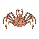 King crab icon in cartoon style isolated on white background. Sea animals symbol stock vector illustration. King crab icon in cartoon design isolated on white Royalty Free Stock Photo
