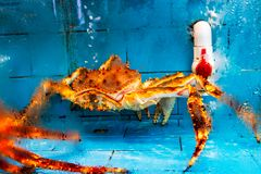 King Crab In Fish Tank Stock Images