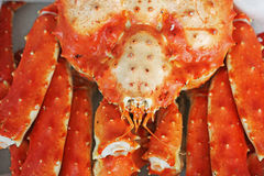 A king crab Stock Images