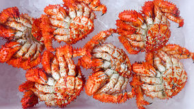 King Crabs Stock Photos