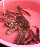King crabs Stock Photography