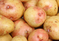King Edward Potatoes Royalty Free Stock Photos