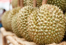 King of fruit durian from thailand. Durian fruit on the market in thailand Stock Image