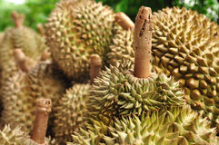 King of fruit fresh durians  in market, Thailand. Stock Images