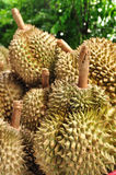 King of fruit fresh durians at Thai market Stock Photo